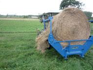 Feeding Round Bale